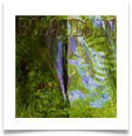 BOSQUES IN MINIATURE FOREST BONSAIS MINIATURA cristales